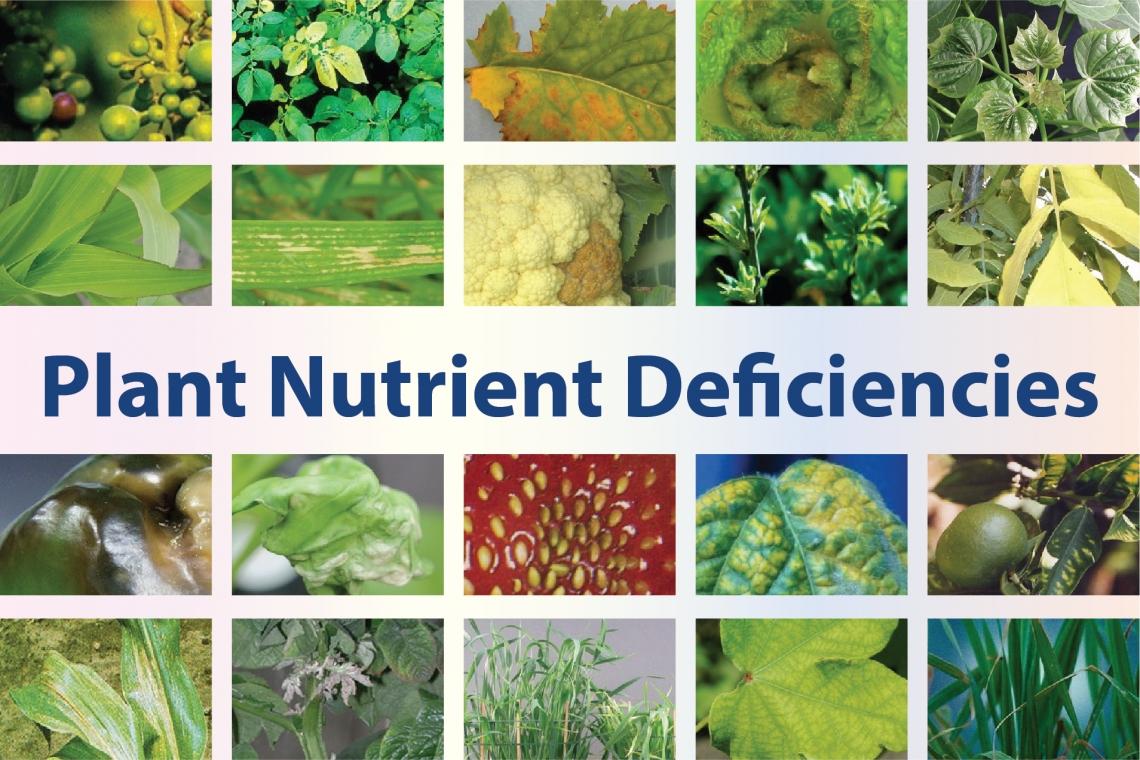 YaraVita® - Plant Nutrient Deficiencies